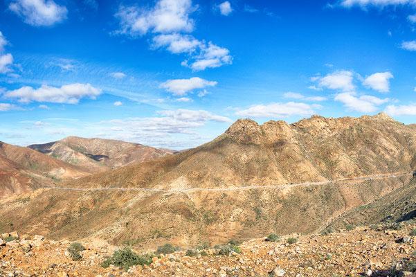 Scalinatella longa, longa... - (Fuerteventura 2017)