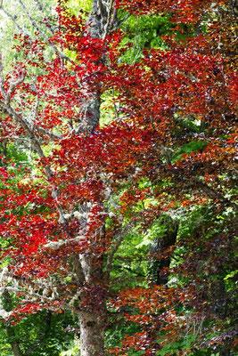 Il rosso e il verde - (Segovia 2014)