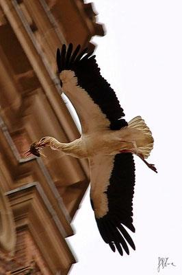 La cicogna volenterosa - (Navarra 2012)