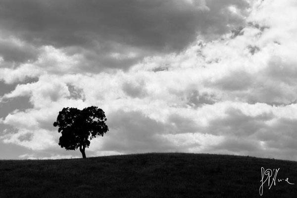 Aspettando il temporale... - Granada  - (2014)
