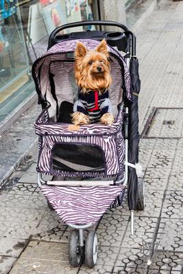 Carrozzino per cani (da notare l'ombrello) - (Bilbao 2016)