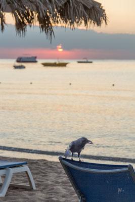 Breakfast on the beach - Egitto - (2020)