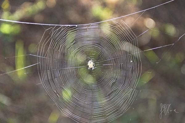Un ragno ordinato - (Val d'Orcia 2014)