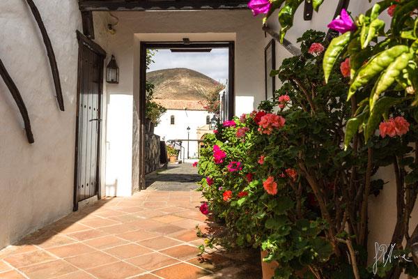 Scorcio canario - (Lanzarote 2017)