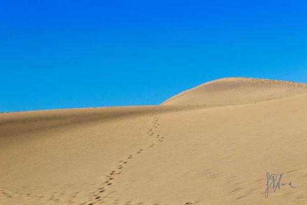 Ma è proprio un deserto? - Gran Canaria  - (2014)