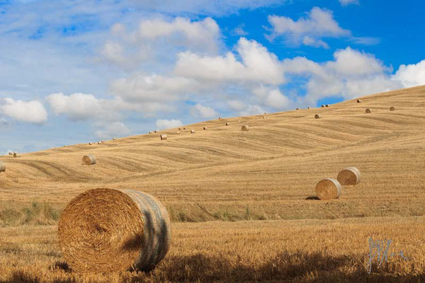 Che balle! n° 1 - (Val d'Orcia 2014)
