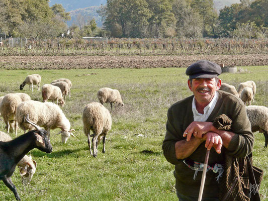 Il divo - Cilento  - (2010)