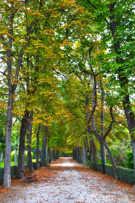 Autunno al Buen Retiro - Madrid  - (2014)