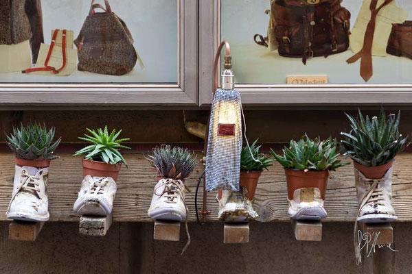 La pianta della scarpa o la pianta nella scarpa? - Montepulciano  - (2014)