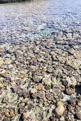 Barriera corallina - Sharm el Sheikh - (2020)