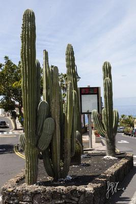 29 marzo - (Tenerife 2015)