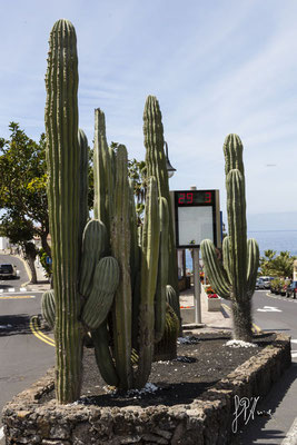 29 marzo - Tenerife  - (2015)