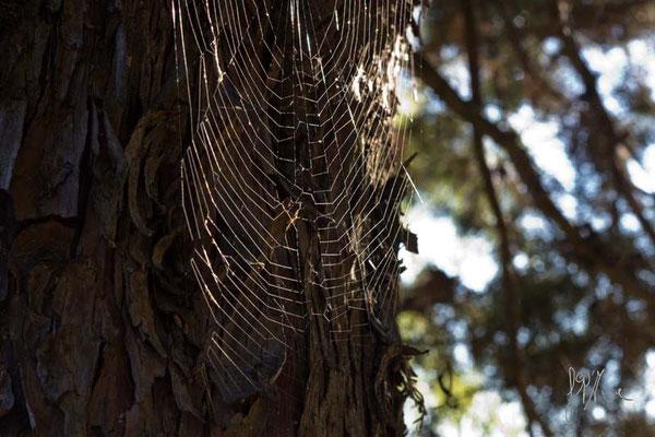 Un ragno disordinato - (Val d'Orcia 2014)