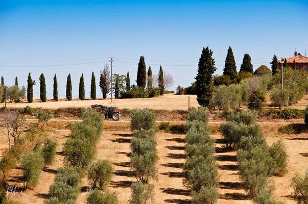 Ritmo n° 6 - Toscana  - (2012)