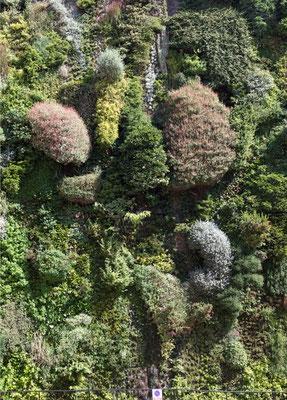 Il giardino verticale - Madrid  - (2013)