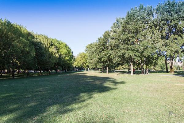 Cielo, legno, foglie ed erba - Pamplona - (2019)