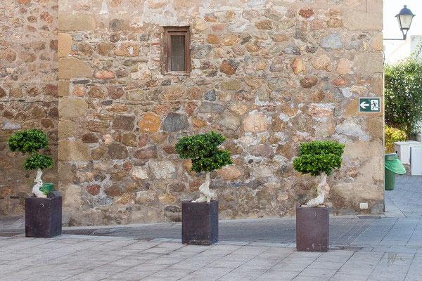 Bonsai in fuga - Andalusia - (2019)