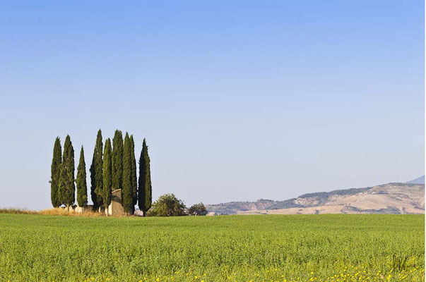 Toscana - Val d'Orcia - (2013)
