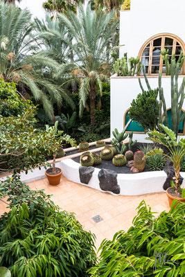 Verde canario - (Lanzarote 2017)