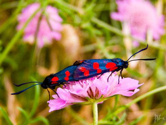 Farfalle in amore - (Amantea 2010)
