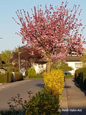 Frühling in Grolsheim
