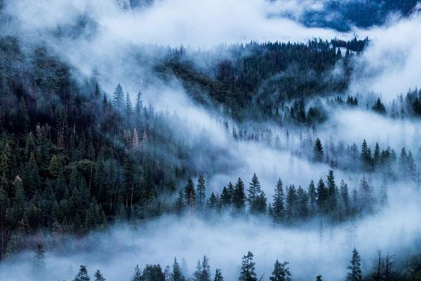 Forêt en montagne
