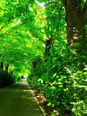 Fattoria Liliano へ続く緑の小道