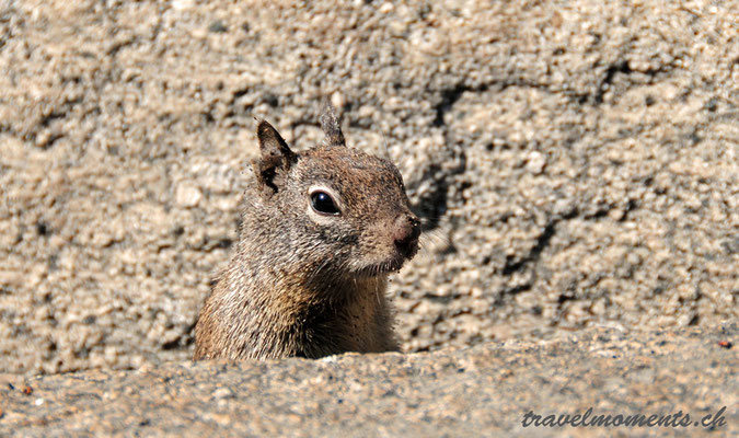 squirrel, vernal fall, yosemite np; ca