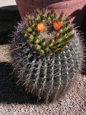 cactus, scottsdale; az