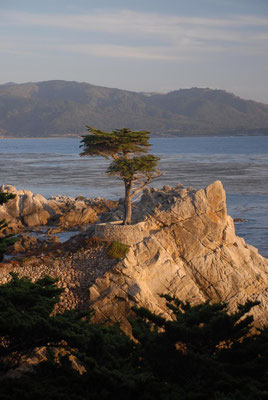 lonely cypress, 17 miles drive, monterey; ca