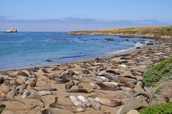 elephant seals, hwy 1, cambria; ca