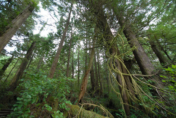 pacific rim trail, ucluelet, vancouver island; bc