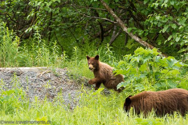SSchwarzbären (Black Bears)
