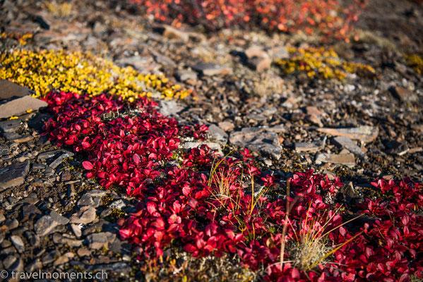 Arctic Circle, Dempster Hwy