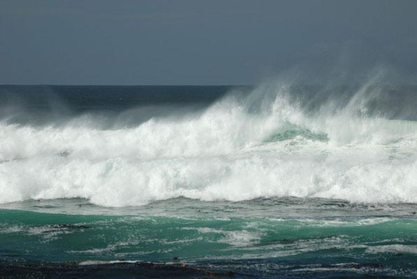 pacific coast, 17 miles drive, monterey; ca