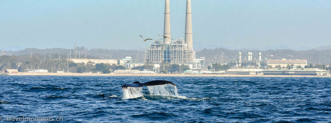 Moss Landing - Whale watching