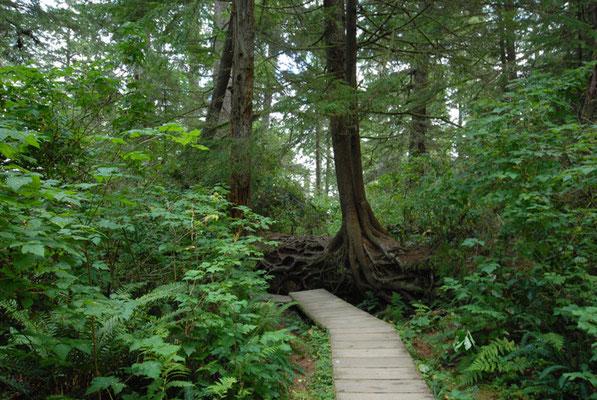 rainforest, vancouver island; bc