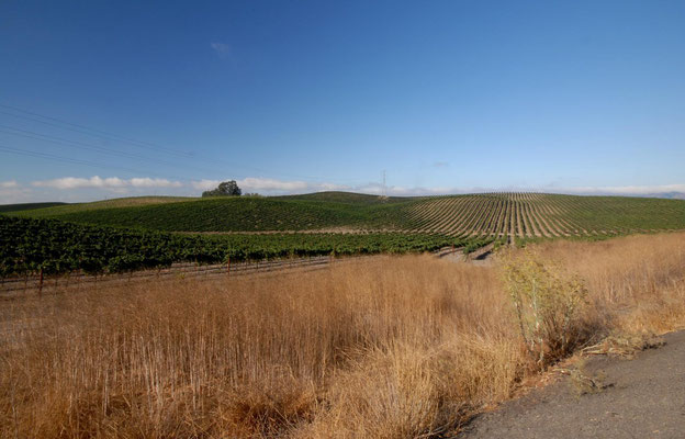 napa valley, wine country; ca