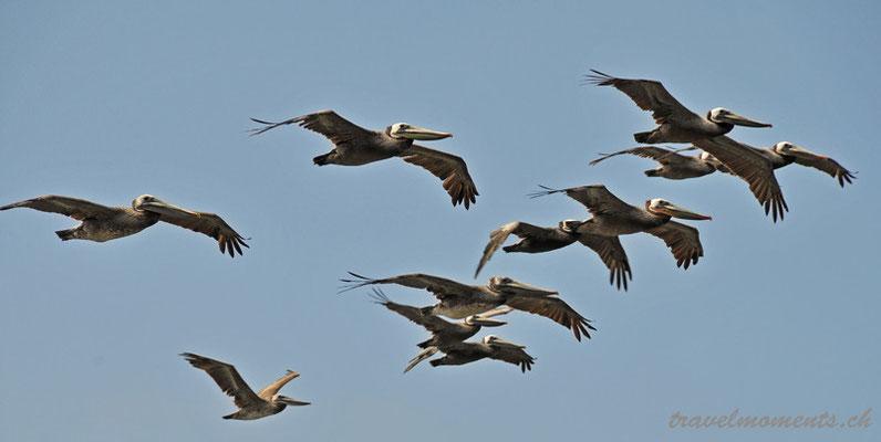 pelican's, big sur; ca