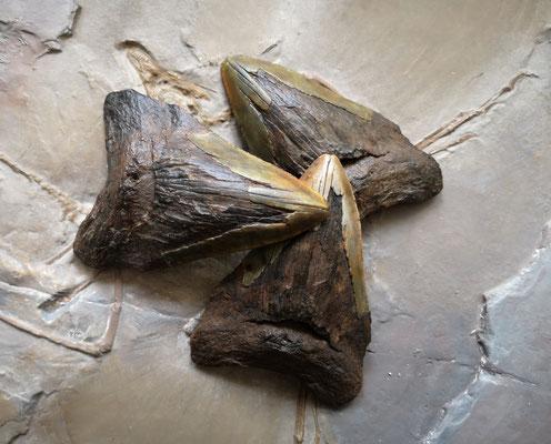 Megalodon teeth. Original and replicas