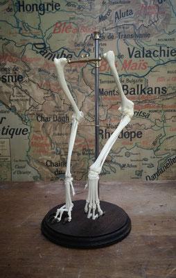 Dismountable model : broken leg vs normal legg