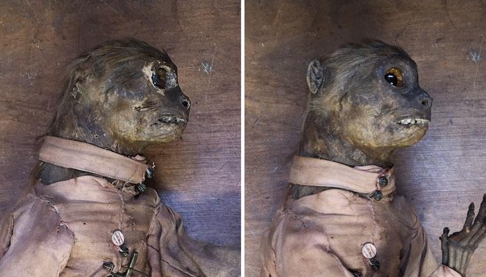 19th century anthropomorphic monkey