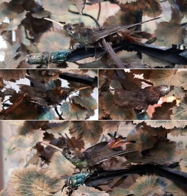 Hummingbird complete restoration