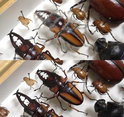 Intervention curative sur la collection entomologique du Musée africain de Namur