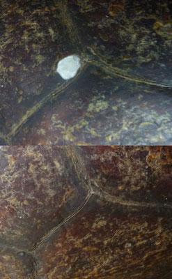 Restauration d'une carapace de tortue ancienne