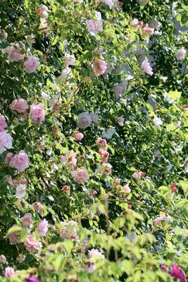 Sonnenbaum Naturkosmetik