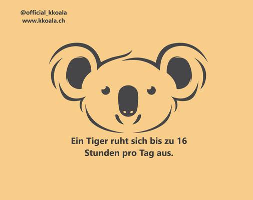 Ein Tiger ruht sich bis zu 16 Stunden pro Tag aus.