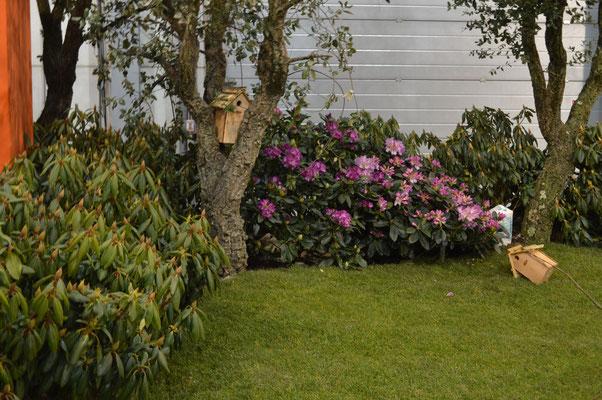 Tuin idee den bosch de website van jpnatuurfotografie