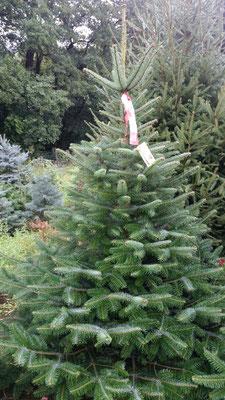 Makierungsband am Baum gut sichtbar anbringen.