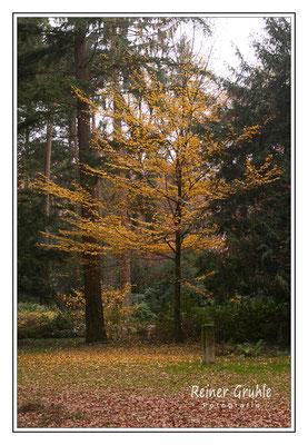 <b>Herbststimmung</b><br>    ©Reiner Gruhle